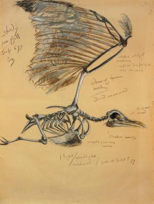Study for Seagull Sculpture; 1994